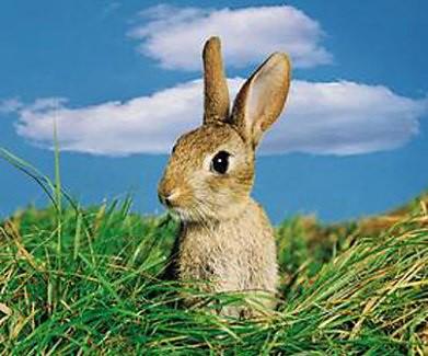 不穩定的年代,必須學會狡兔有三窟…