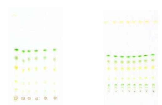 Χρωματογραφικές Μέθοδοι 3224265631_a9ac8c0656_o