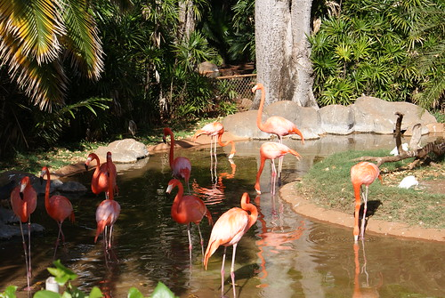 Then I remembered that I had some pictures of flamingos in Africa at Lake