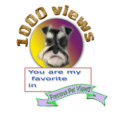 precious pet pics 1000+ views