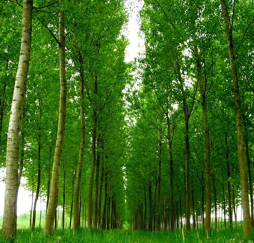 フリー写真素材, 自然・風景, 樹木, グリーン,