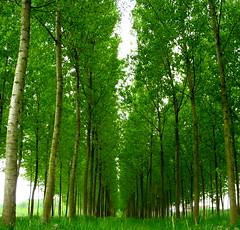 [フリー画像] 自然・風景, 樹木, グリーン, 201105161900