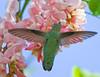 ANNA'S (sea25bill) Tags: california flowers blue sky usa color green bird nature annashummingbird calypteanna