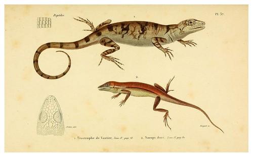 004-Erpétologie générale ou Histoire naturelle complète des reptiles 1834
