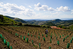 Panorama - Tenuta La Novella-IMG_3446 (Podozoo) Tags: sunset italy panorama vineyard italia tramonto wine tuscany chianti toscana  paysage toscane  vigne italie paesaggio  coucherdesoleil   chianticlassico sangiovese  vigna                   podozoo podozoocom tenutalanovella  podozooltd toscanepanorama  paesaggiodellatoscana