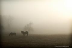 Morning Graze (nailbender) Tags: morning horse sun fog sunrise farm country alabama grazing rual blountcounty nailbender abigfave