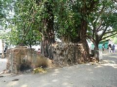 P1040753 (Gorgonzola) Tags: kerala day21 kochi southindia