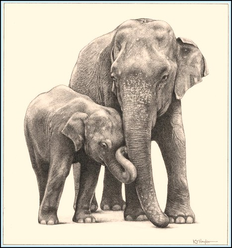 PENCIL DRAWING: How To Draw Elephant : Fine Art Pencil Drawing
