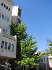 Far From the Tree (126/365) (Cycrolu) Tags: school trees sunlight mason research daytime georgiatech buidling academics civilengineering project365