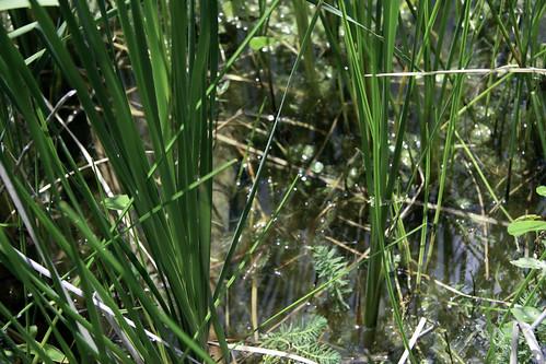 Reedy Pond 2-15 - baby estuary