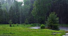 pouring rain (Jan_ice) Tags: pond woods country springrain hardrain