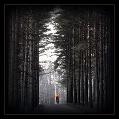 just a kid (sparkleice) Tags: road trees shadow orange tree monochrome forest dark person cycling kid alone child darkness small olympus tall trunks highlight pinetrees bicycke artisticexpression justakid abigfave artlibre olympussp550uz olympussp550ultrazoom sparkleice