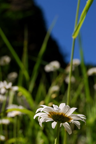 along the collawash