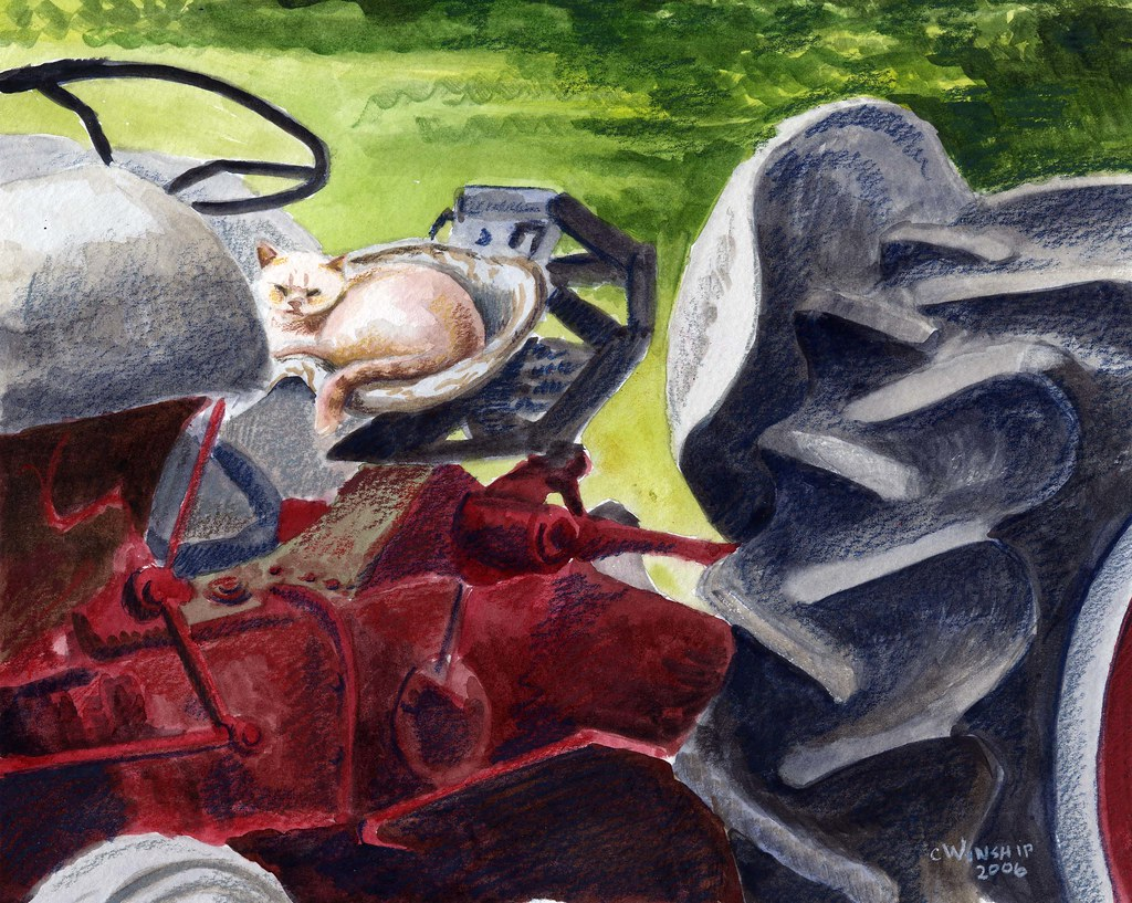 kitty on a tractor
