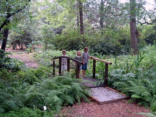 botanical garden - boys on bridge