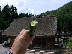 相倉合掌集落で食べたきゅうり