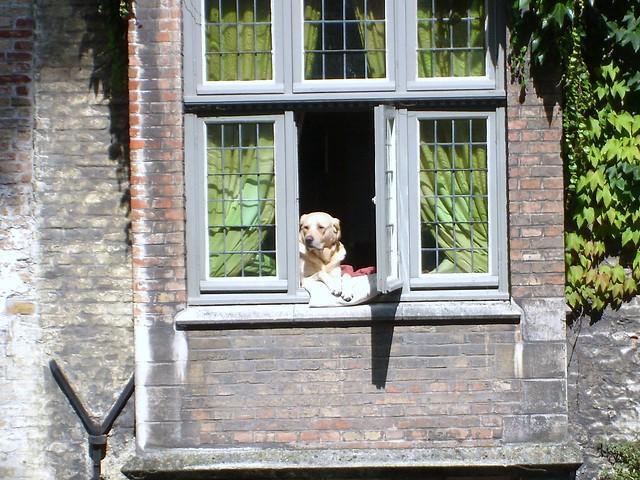 Bruges  Lazy dog from 'In Bruges' film Aug 2008