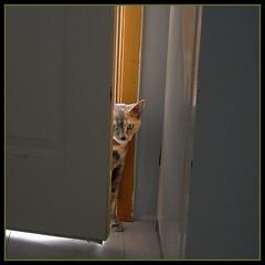 Scared little girl (angiedee25) Tags: catnipaddicts
