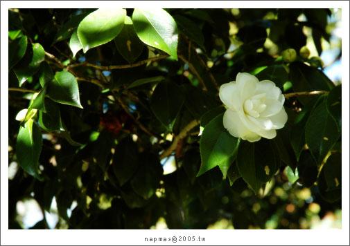 DSC_9245.jpg