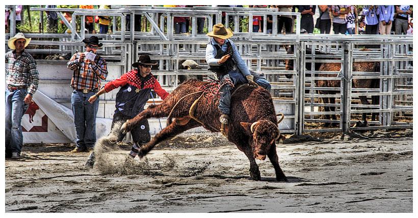 Bull Riding #1