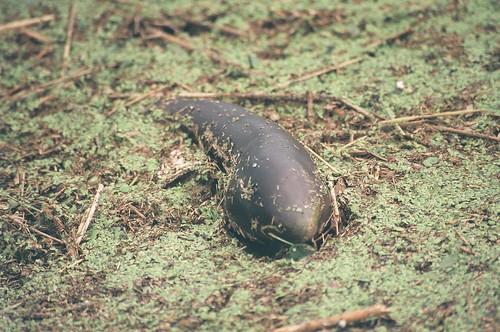 Thrown eggplant