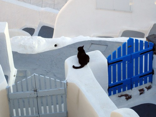 Cat in Santorini, Greece