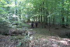 off roader (stilleben ['stelle:bƏn]) Tags: hareskoven svampejagt svampetur