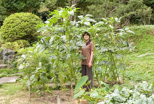Okra Plant Leaves Okra Plant Doodle