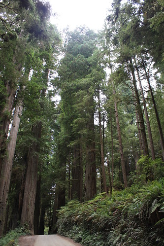 Redwood National Park On the fourth leg of our California/Oregon 'tall