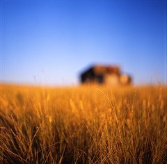thursday naturey crap (Mathias*) Tags: canada film saskatchewan fujiprovia100f pentaconsixtl ifyoucan grasslandsnationalpark withbarnbokeh gahbokeh canyoupronouncebokeh imsureitsoundsweird itsoverratedanyway bokehisso2007