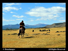 MONGOLIA (BoazImages) Tags: travel yak horse man landscape asia sheep central culture mongolia grasslands boazimages