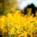golden sunset bokeh by *ojoyous1*