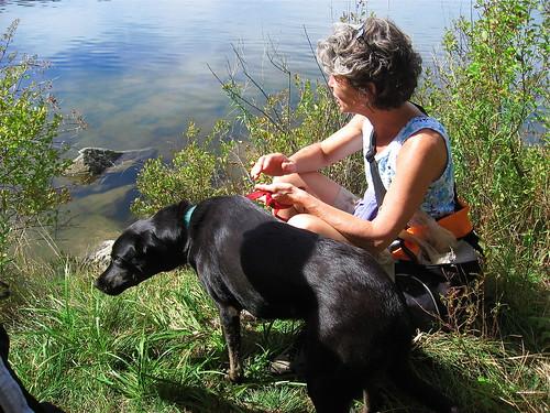 dog and hiker