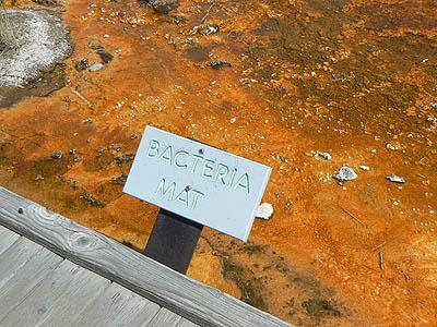 bacteria mat.jpg