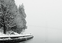 winter wonderland (petetaylor) Tags: bridge trees white snow black water grey nikon burrardinlet lionsgate cbcradio3 d300 beautifulbritishcolumbia beyondrobson artofzen theworldthroughmyeyes earthisparadise tgamweather