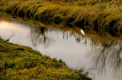 our guardian egret ...