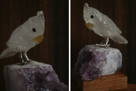 A006 - White with yellow beak on stone (2)