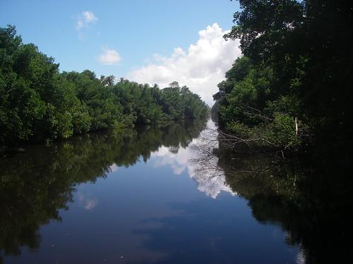 Nariva River, near the mouth