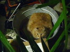 Jasper hiding in the bucket