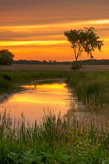 The Heron (Matt Champlin) Tags: orange sunlight reflection tree heron canon fire evening waiting solitude quiet wildlife auburn pop swamp montezuma centralnewyork marsh popped nationalwildliferefuge orangesunset montezumanationalwildliferefuge mywinners abigfave eos40d photocontesttnc09