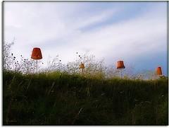 Illumination (ruschi_e) Tags: lamp grass schweiz switzerland lampe illumination gras attraction beleuchtung olten attraktion anawesomeshot platinumheartaward ruschie kunstplatzlinternational silo8 karlskhnegassenschau lovely~lovelyphoto