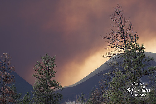 Intlpam Fire 951 Aug 20