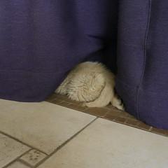 my doggie having a nap (BBPANTONE) Tags: scuplture honfleur normandy roseaux beehome