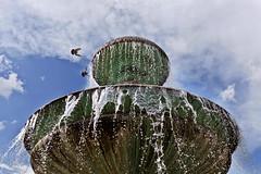 Flying In For A Drink (geoff.greene) Tags: bird fountain delete10 delete9 germany munich delete5 delete2 delete6 delete7 delete8 delete3 delete delete4 save save2 canon5dmark2 deletedbydeletemeuncensored