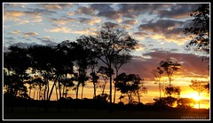Serenidade   <<<>>>   Serenity (Opimentas) Tags: trees sunset brazil sky cloud sun tree sol nature brasil angel clouds landscape march photo flickr photos natureza go tags paisagem serenity nuvens wikipedia bento nina nuvem ops goinia gois entardecer pimenta maro wikimedia onofre gyn talita 080 serenidade onthefield 2013 wikipdia onofrepimenta wikimdia opimentas bhto ninapimenta neroplis g0080 maro2013