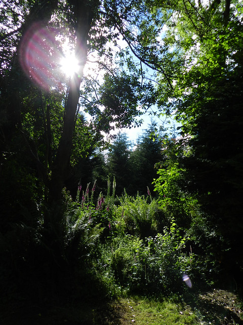 Kilmacurragh Arboretum