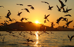 gulls into the sunset (esther**) Tags: light sunset sea sun sunlight seagulls reflection bird colors yellow island golden flying wings bravo searchthebest gulls silhouettes greece rhodes favoritebirds