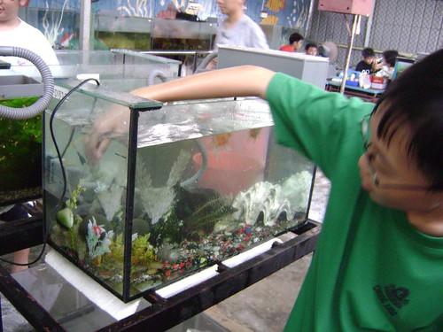 Putting fish