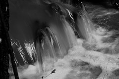 water motion (dawsonjoe) Tags: longexposure blackandwhite motion nature water creek river stream bandw b38w black38white