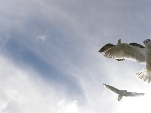 Peeking Seagulls